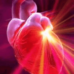 bcaa bodybuilding supplements also build heart muscle