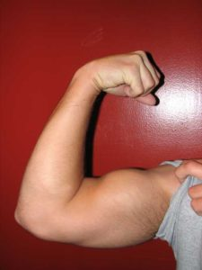 acetyl l carnitine benefits muscles