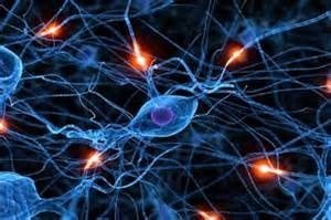 nootropic supplements for the brain