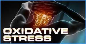 what is the best magnesium supplement for oxidative stress